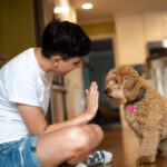 How To Train A Puppy To Stop Barking