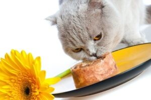 How to make frozen treats for cats tasty