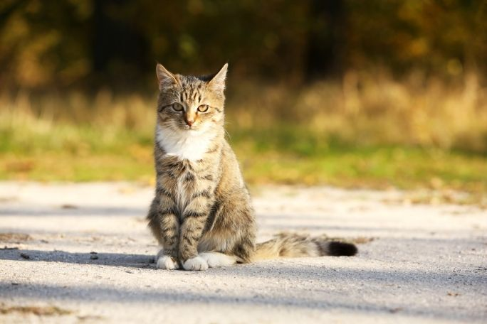 How to teach a cat to come outdoors
