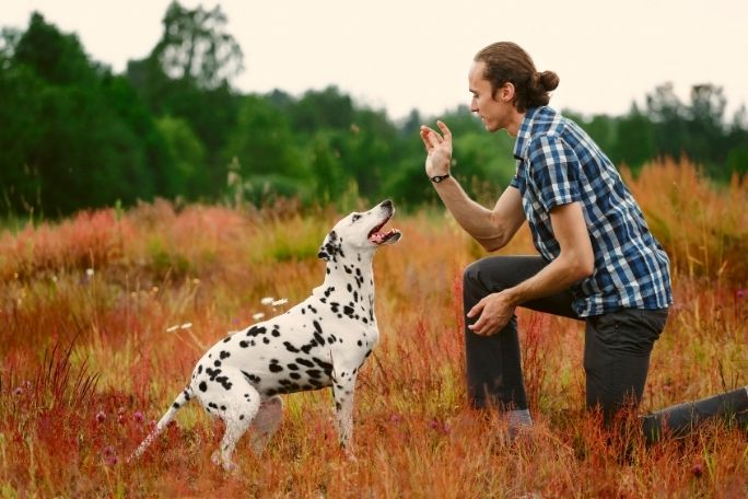 Learn a new trick with a dog
