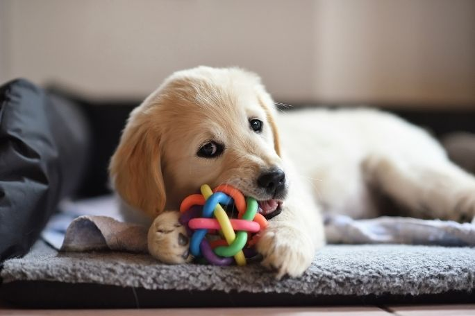Provide chew toys for your dog to play with
