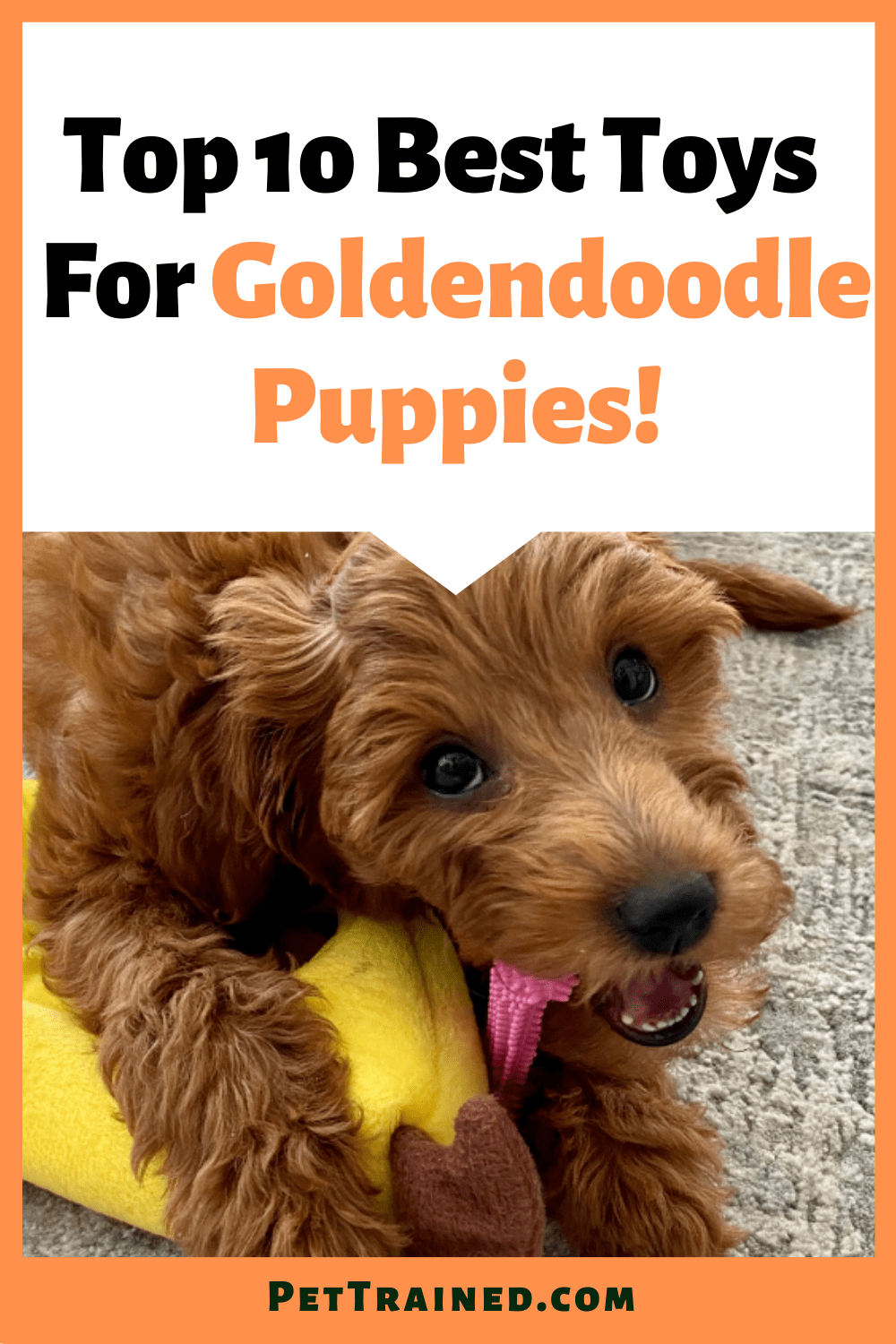 Top 10 Best Toys For Goldendoodle Puppies and dogs