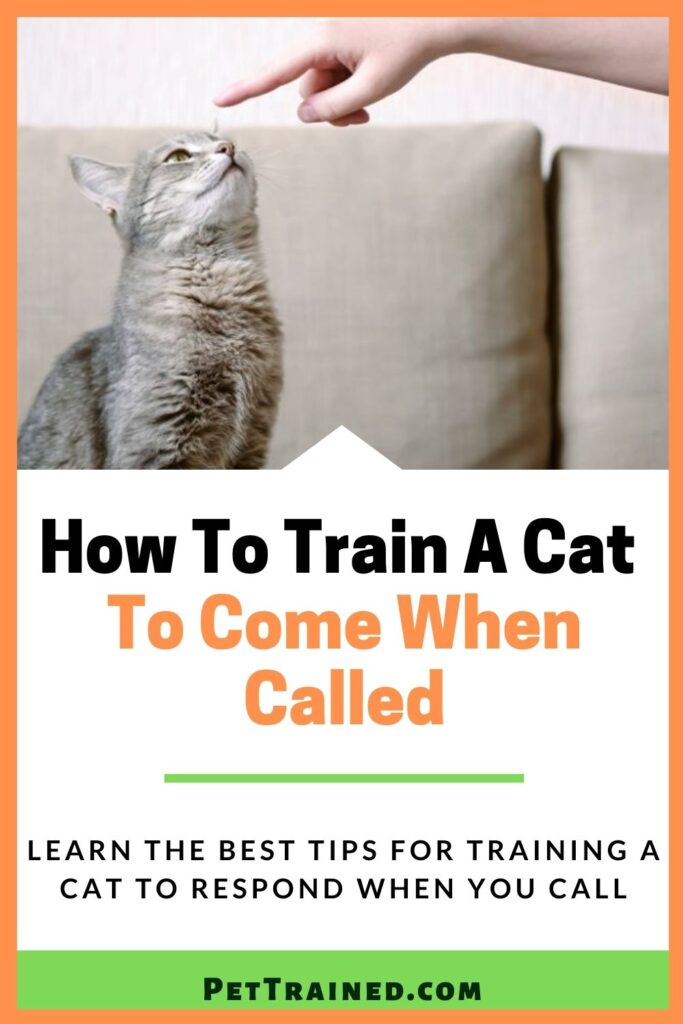 how to call a cat from far away