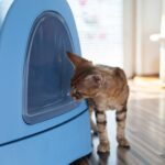 10 Easy Ways To Remove Litter Box Odor In An Apartment