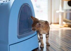 Easy Ways to Remove Litter Box Odor In An Apartment