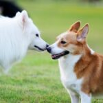 How To Introduce A Visiting Dog To Your Dog