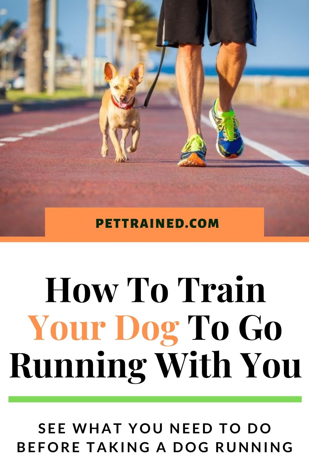 How to help your dog lose weight by running