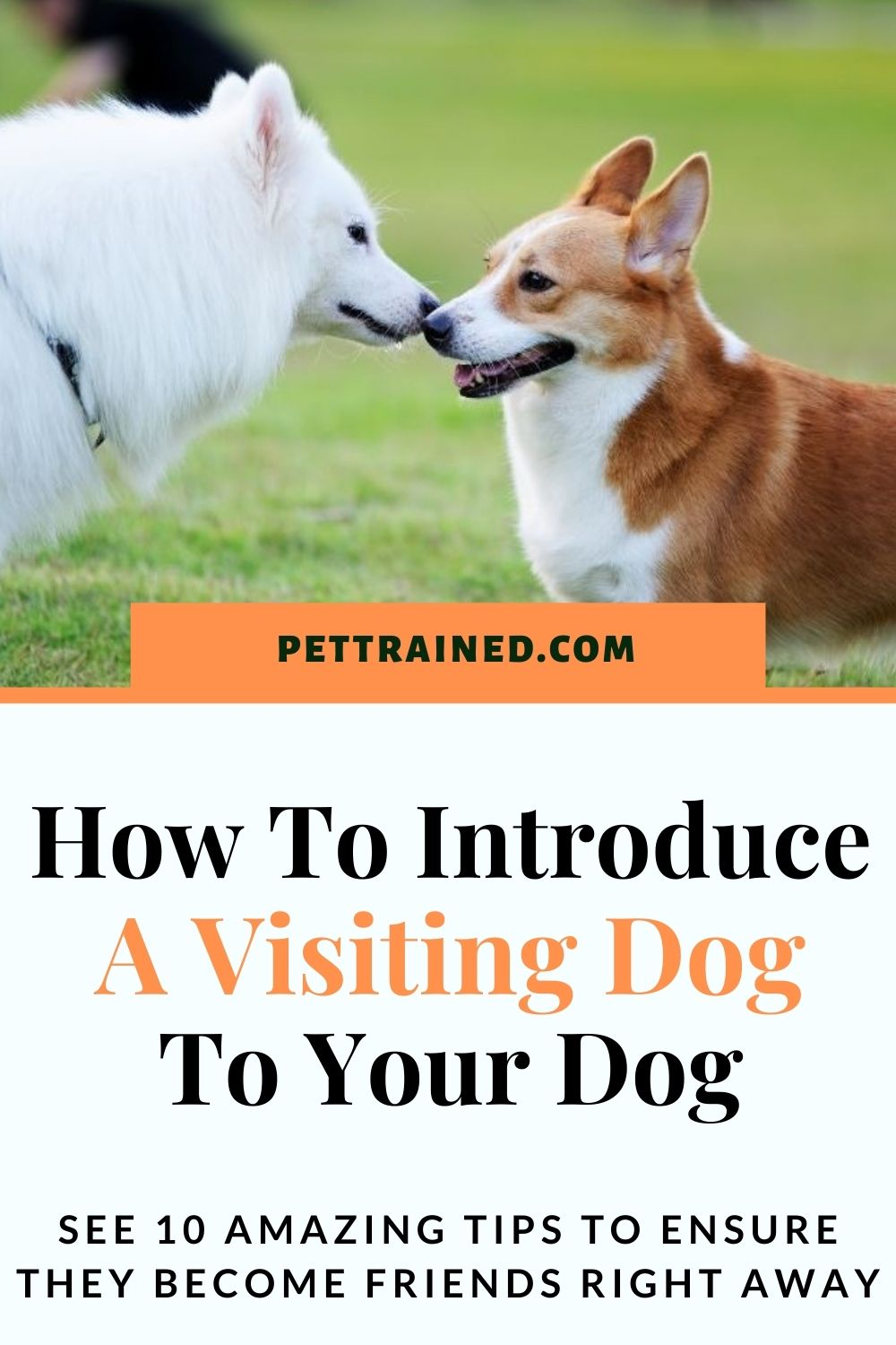 How to introduce one dog to another