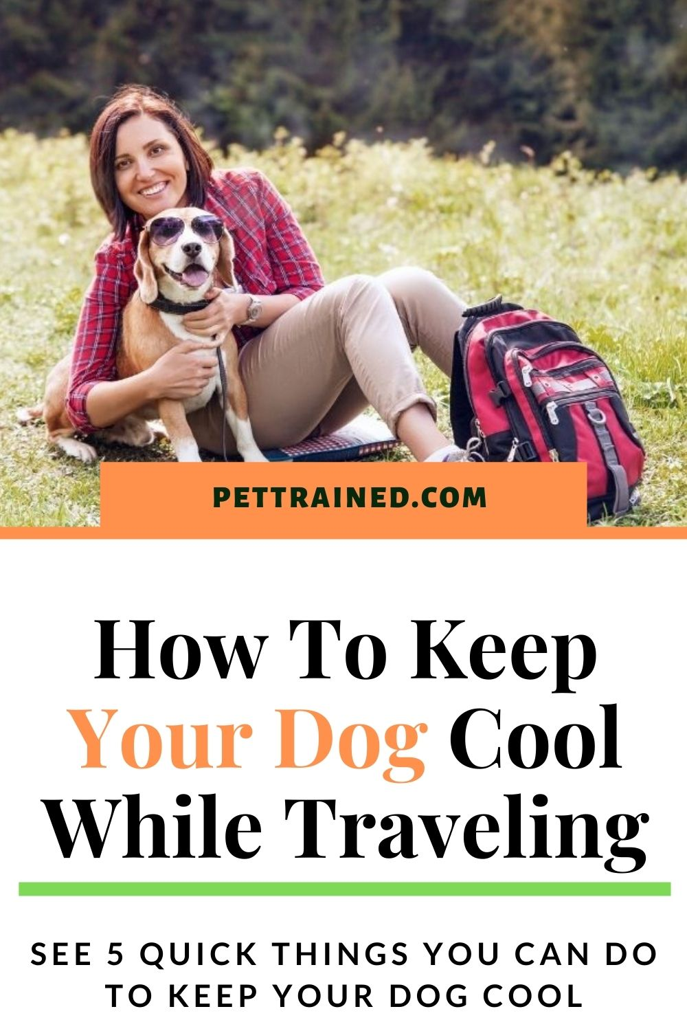 How to keep a dog cool on a trip