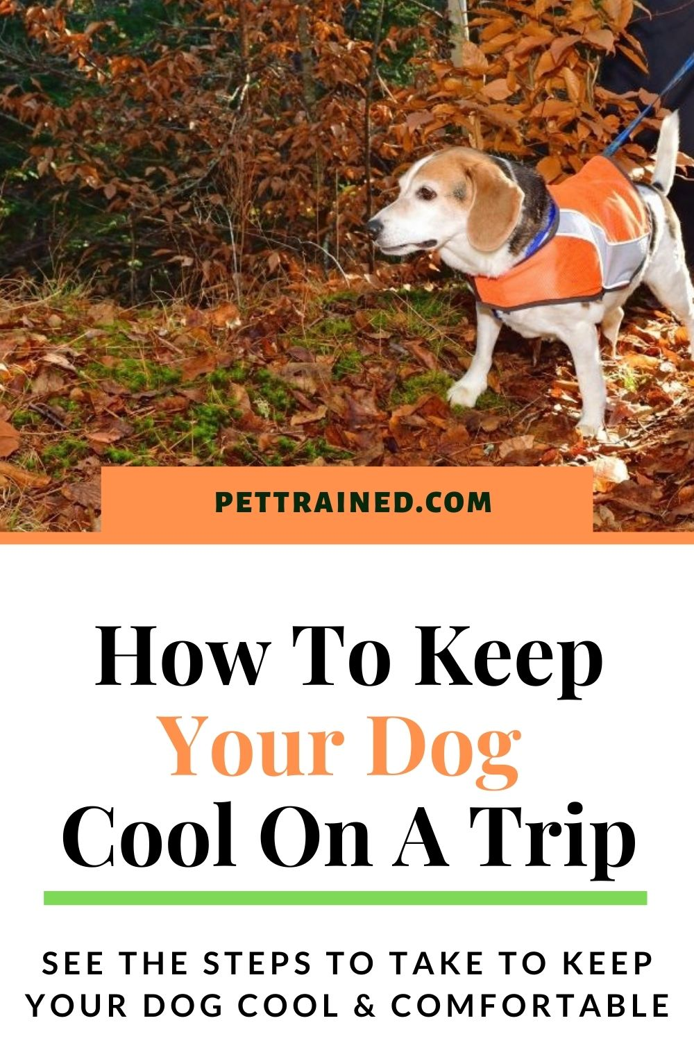 How to protect a dog from heatstroke
