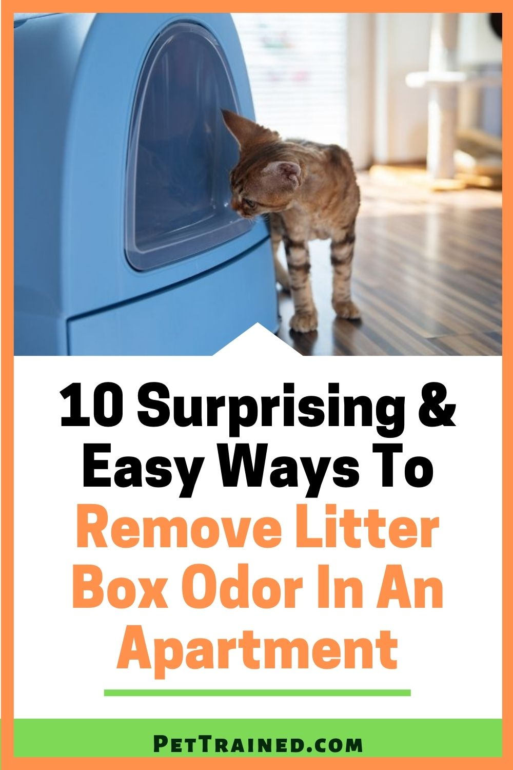 How to remove cat litter box odor fast