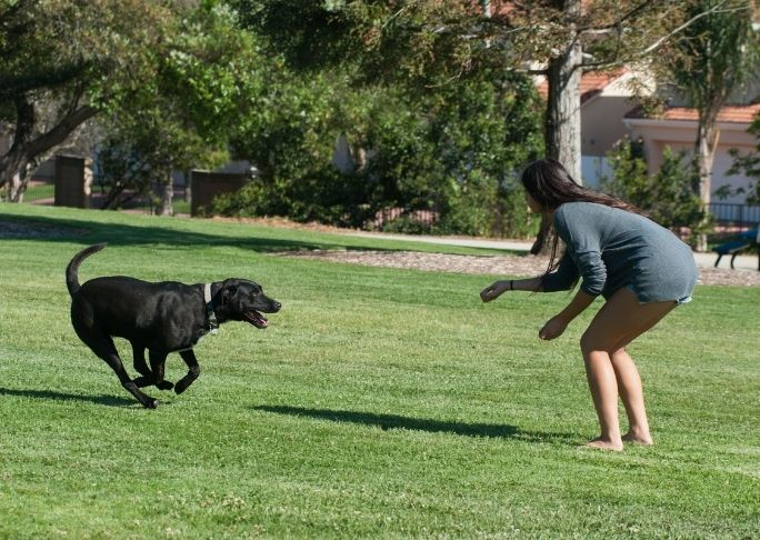 How to train a dog to go running with you