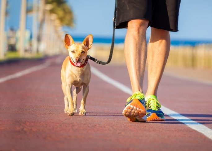How to train a dog to stay at your side