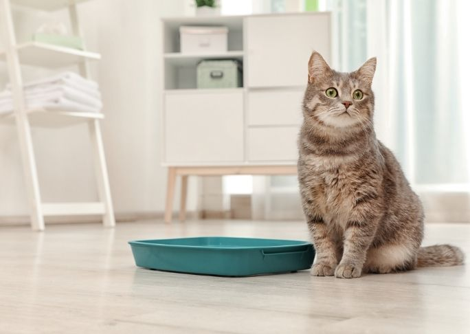 buy a cat litter box that your cat will like