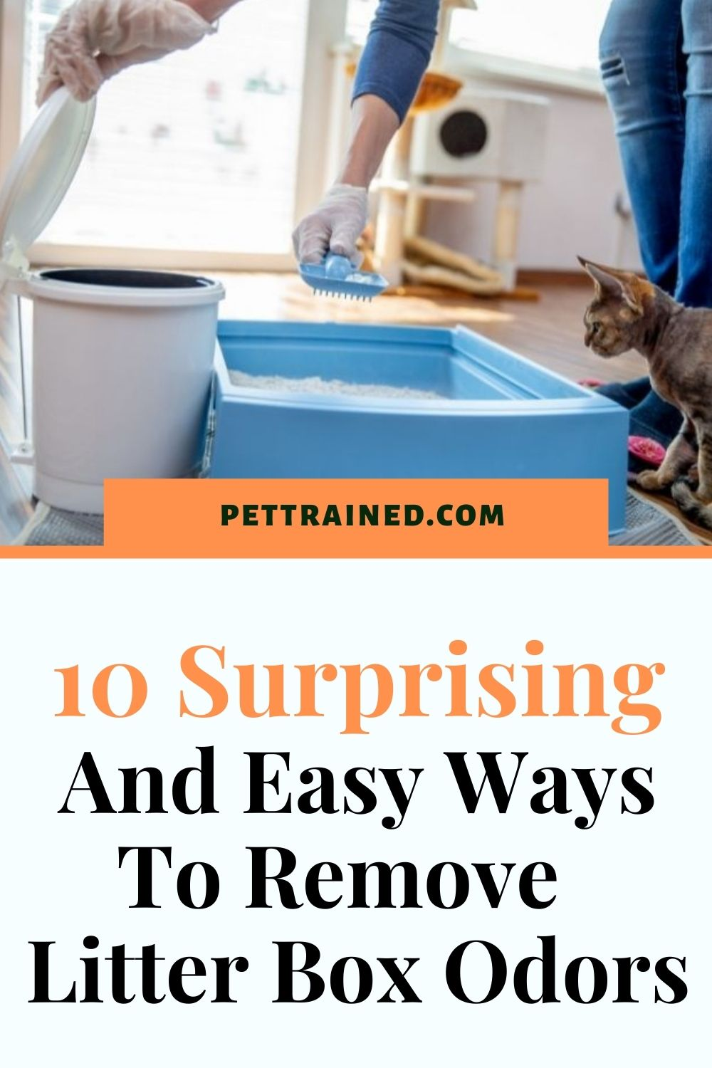 easy ways to get rid of cat smell