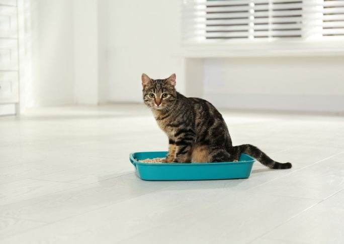 how to remove cat litter box odors in the home quickly