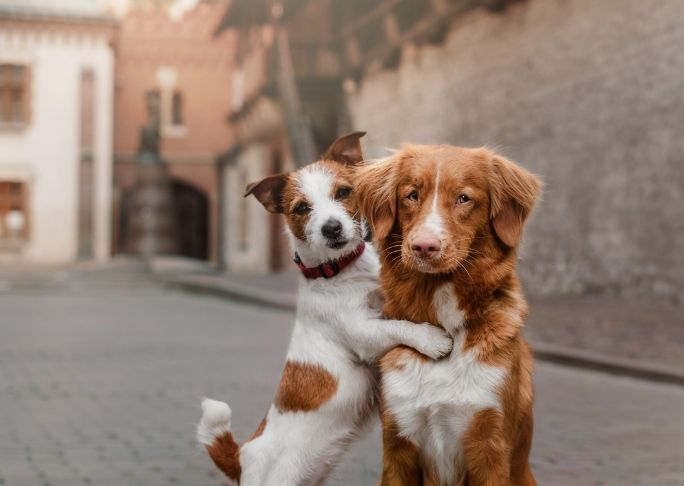 how to train two dogs to be friends