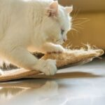 How To Train A Cat Not To Scratch | Stop Damage Now!