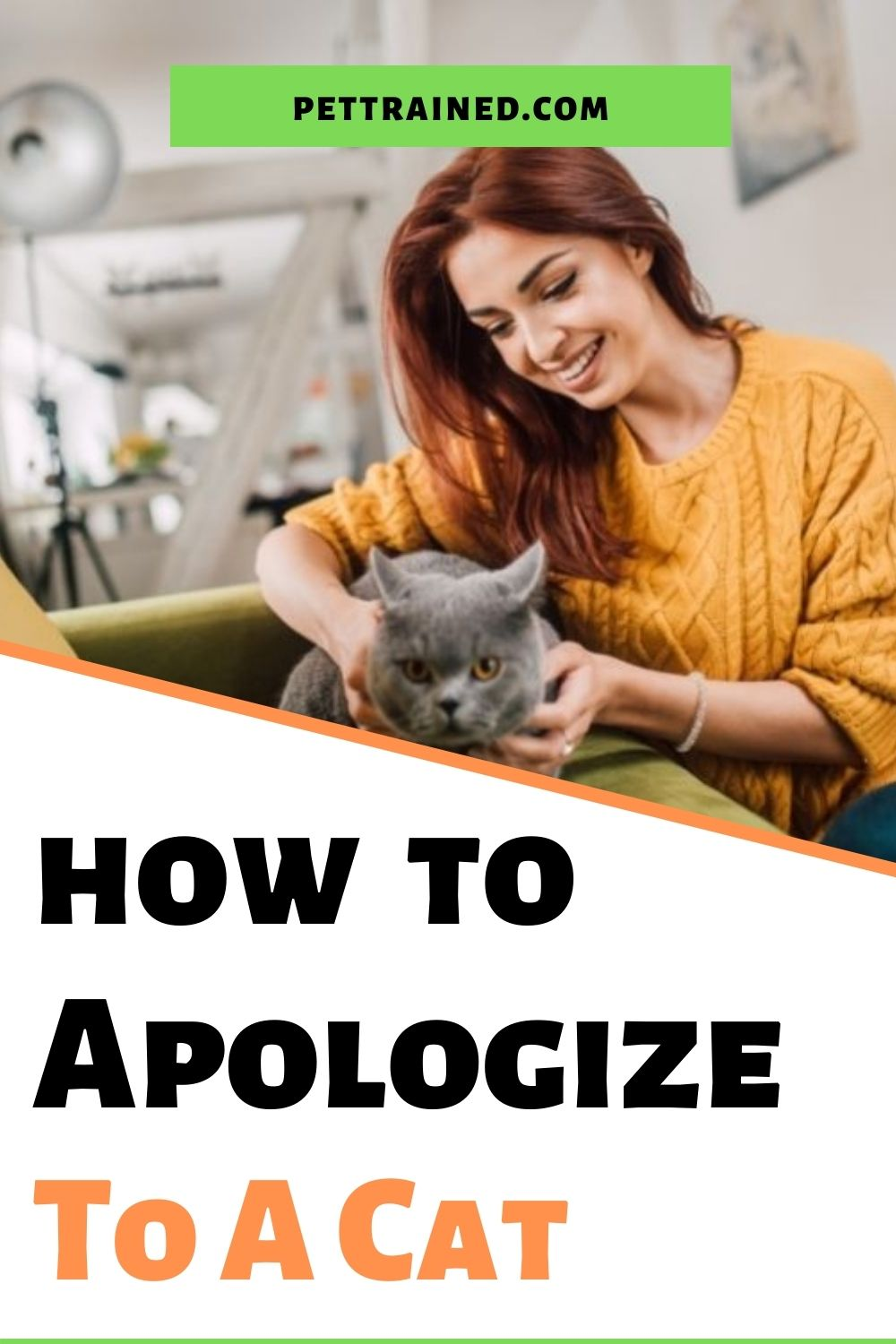How to apologize to a cat