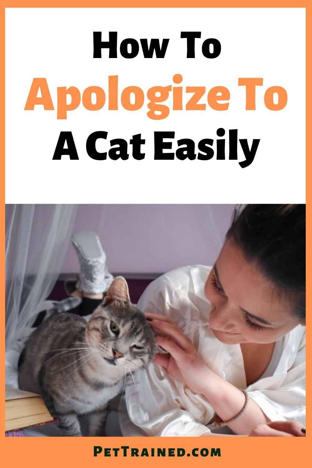 How to apologize to a cat easily