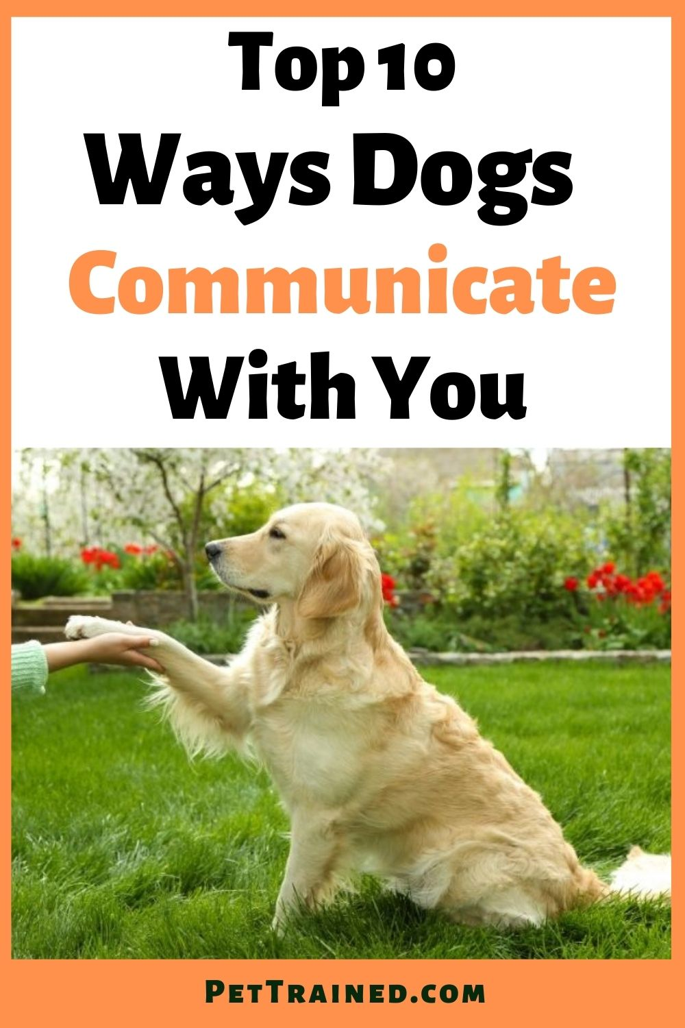 Top 10 ways dogs communicate with you