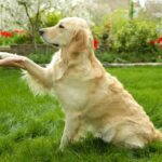 How Do Dogs Communicate With Us? See The Top 10 Ways