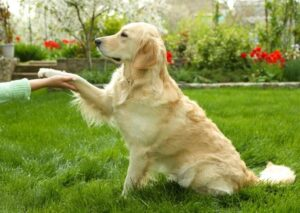 Ways Dogs Communicate With You