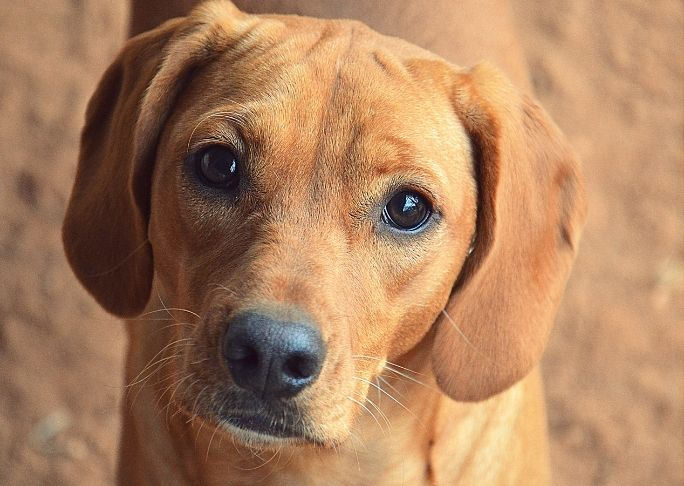 how dogs communicate with their eyes dog body language
