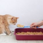 Top 10 Best Cat Litter For Asthmatic Owners & Asthmatic Cats