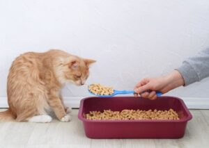 Best Cat Litter For Asthmatic Owners And Cats With Asthma