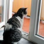 How To Train A Cat To Stay Indoors In 12 Easy Steps