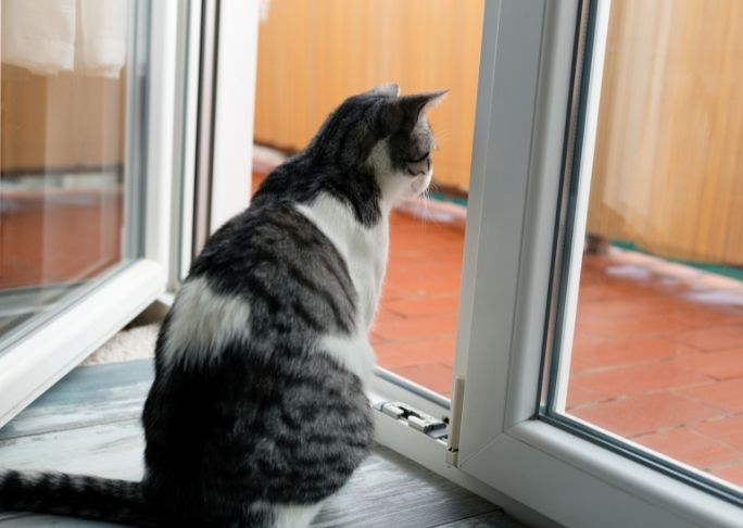 How To Train A Cat To Stay Indoors
