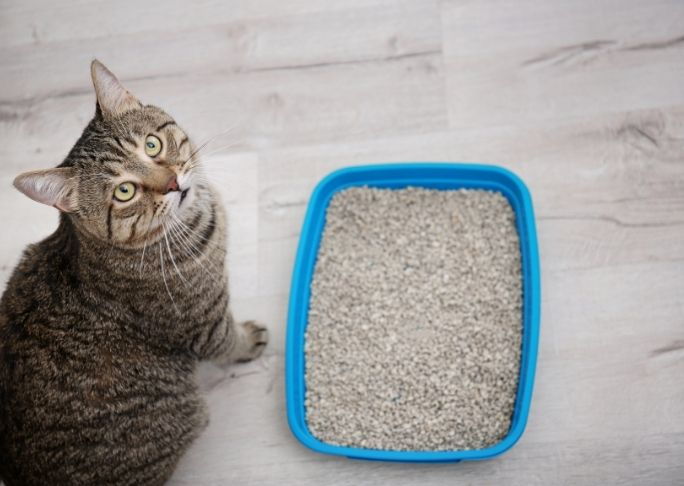 What Is The Best Cat Litter For Asthmatic Owners And Asthmatic Cats