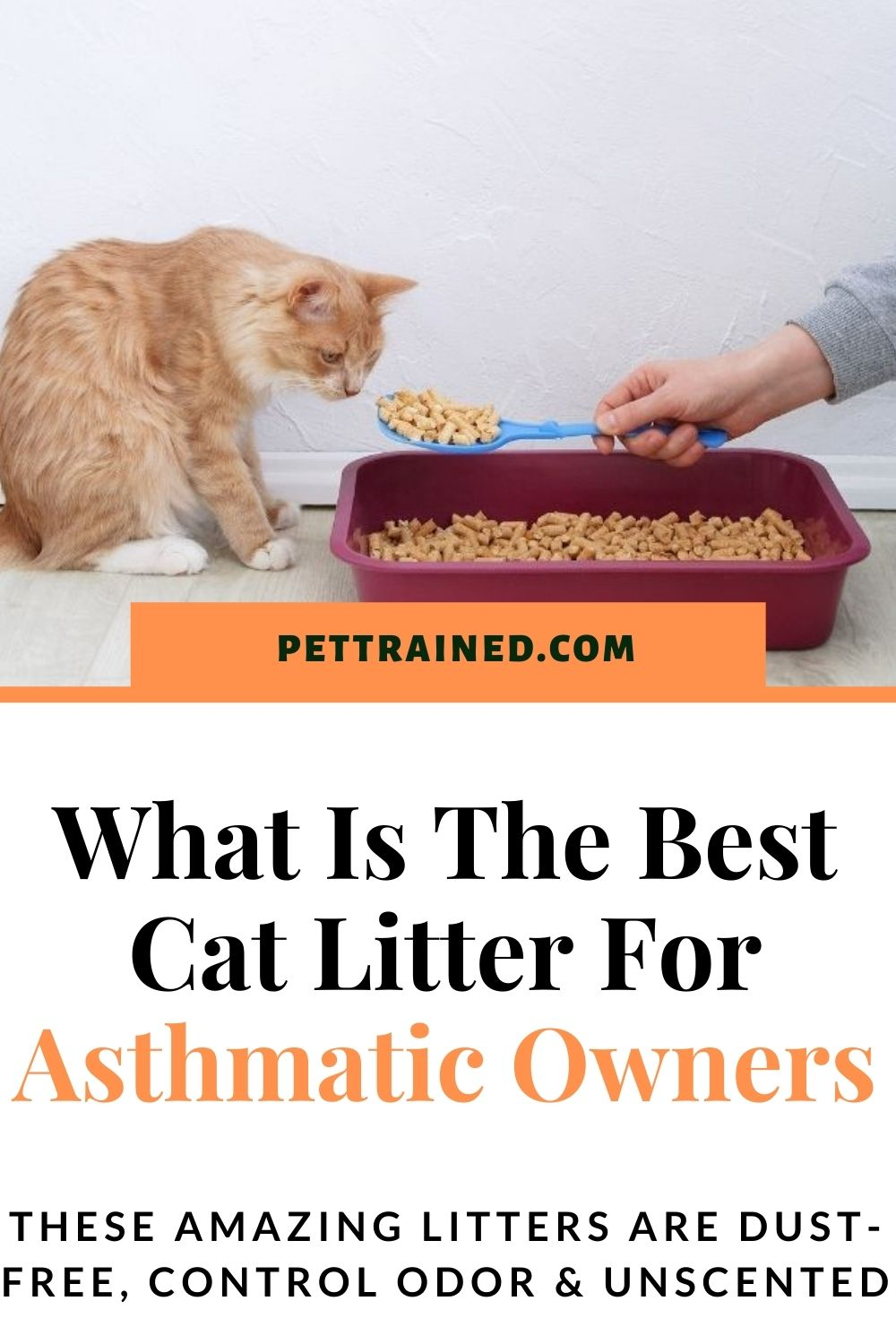 best cat litter for lungs and asthma