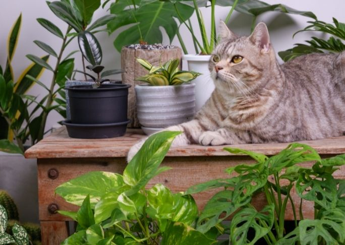 how to train an outdoor cat to be an indoor cat with plants
