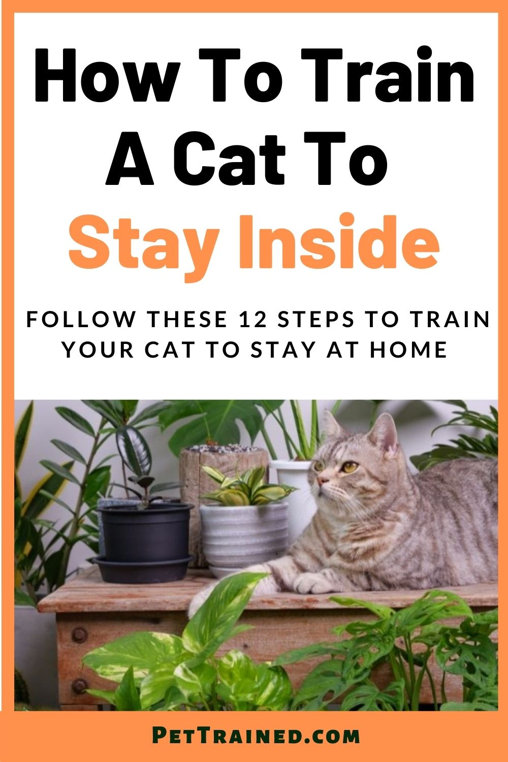 transition outdoor to indoor cat