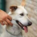 What Is The Best Dog Collar For Sensitive Skin And Necks