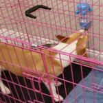11 Best Dog Crate Water Bottle To Keep A Dog Hydrated