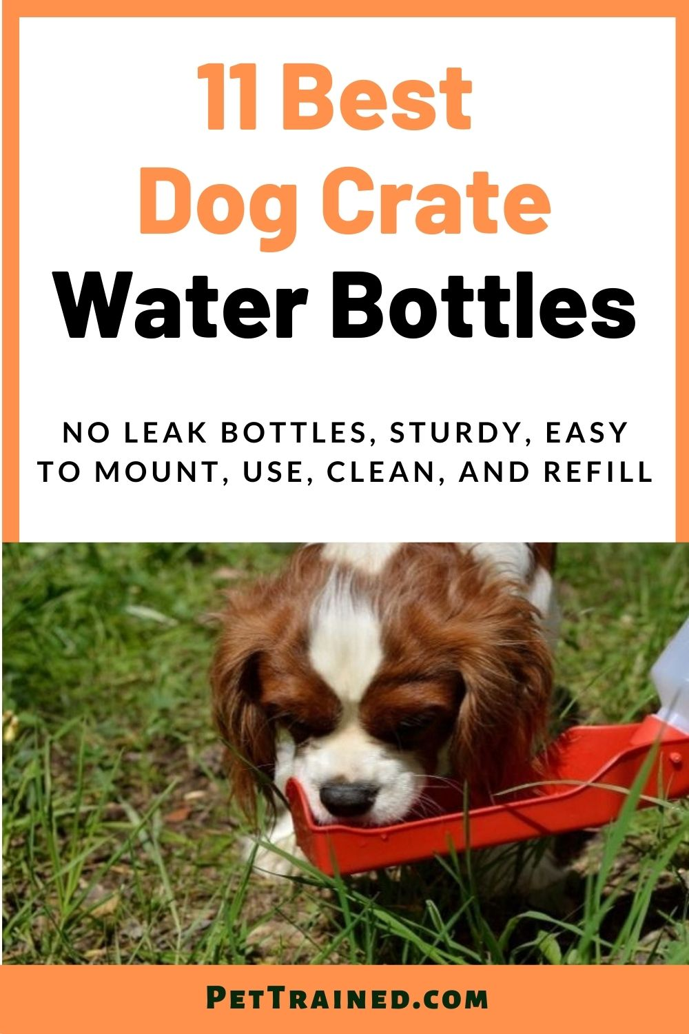 water bowl for dogs