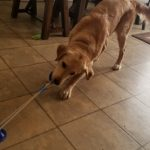 Dog Pulling Interactive Ball Toy photo review