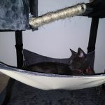 Under Table Hammock For Cats photo review